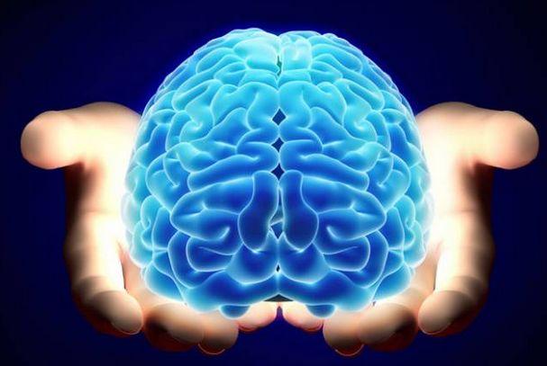 mozg-v-rykah-cheloveka